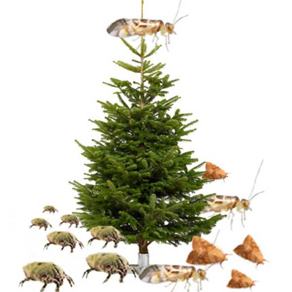 Blog APESA Weihnachtsbäume Tiere und Ungeziefer im Christbaum